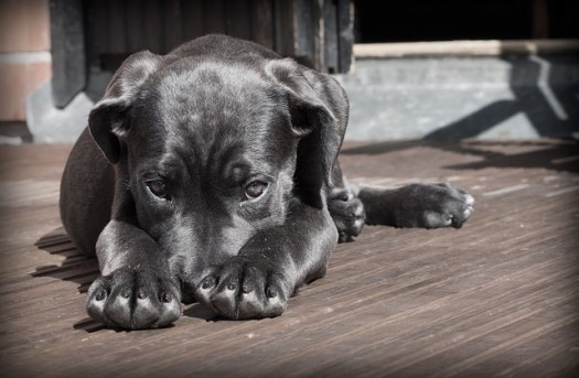 Shy puppy demonstrating introvert and sell