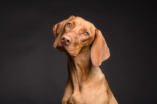 why are you torturing your customers in your sales calls? Dog is confused