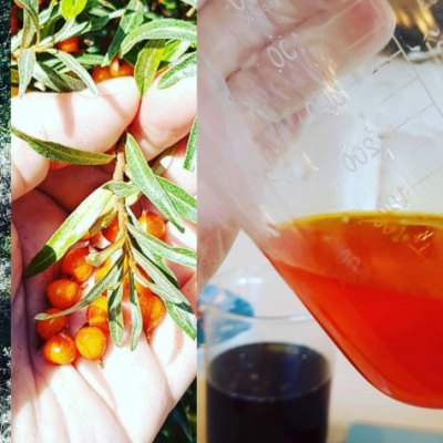 4 Reasons Sea Buckthorn Oil Will Save Your Skin