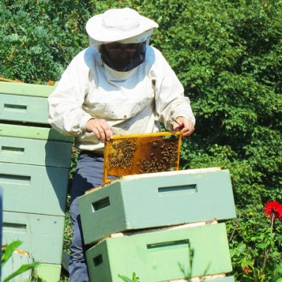 How to save bees. Beekeepers, raw honey and natural beeswax products. By Awake Organics.