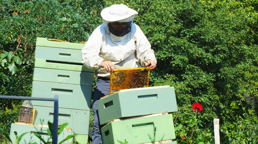 How to save bees. Support local beekeepers UK, raw honey and natural beeswax products. By Awake Organics.