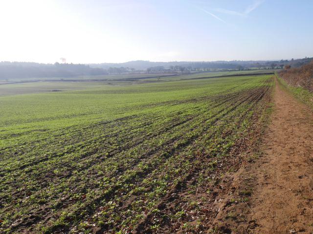 Binton farm