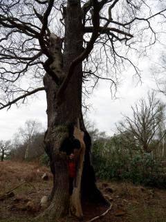 Me inside a tree