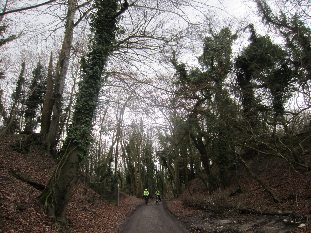 There is so much ivy that the trees are green in winter
