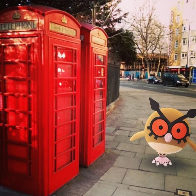This owl needs to make a call...
