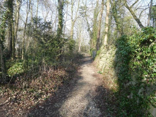 Nice path along the trees