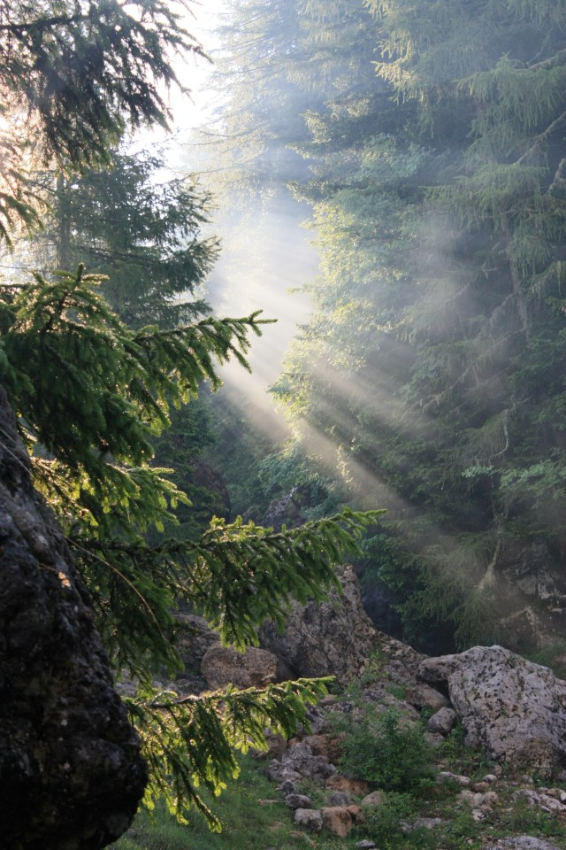 I love the way the light shines through the trees and mist