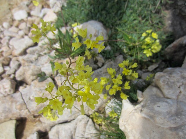 Yellow flowers growing out of the rocks