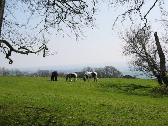 Horses on Kemsing Downs