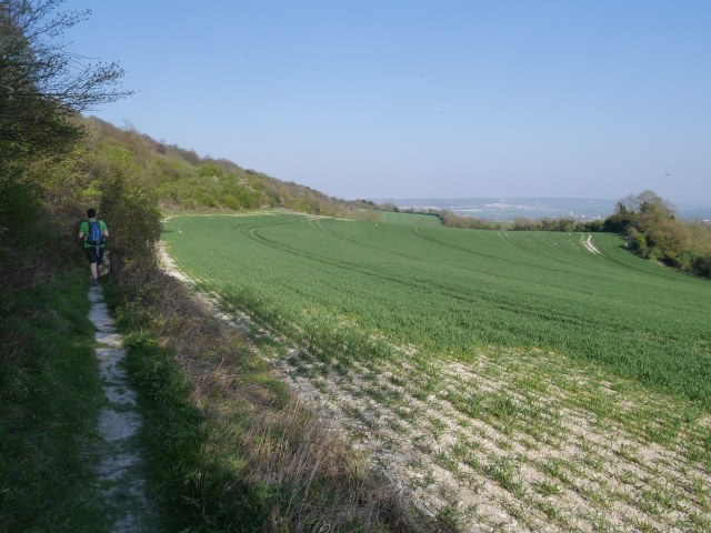 Pilgrims way path in the hedges