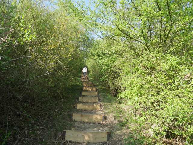 Steps up Holly Hill