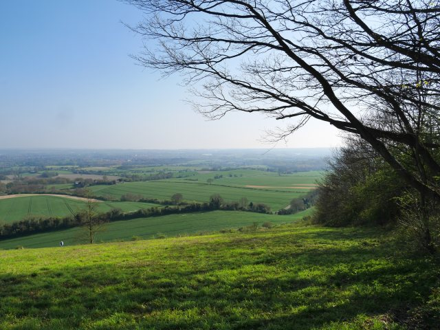 Holly Hill views