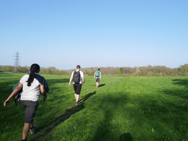 Meadows between Rochester forest
