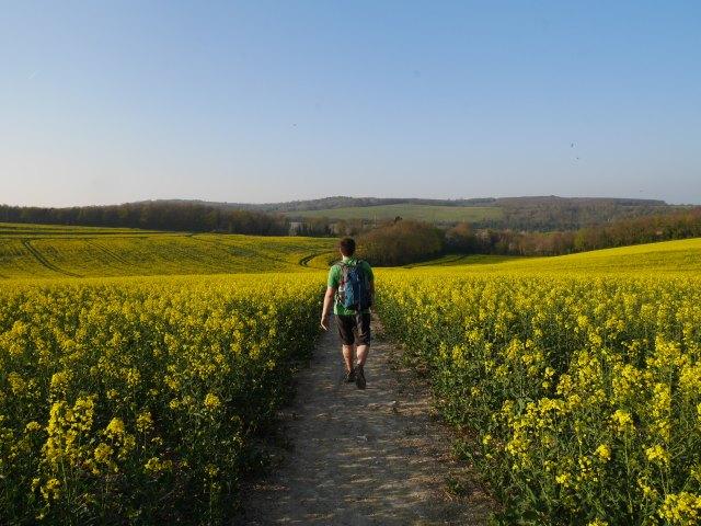 Marc in the fields