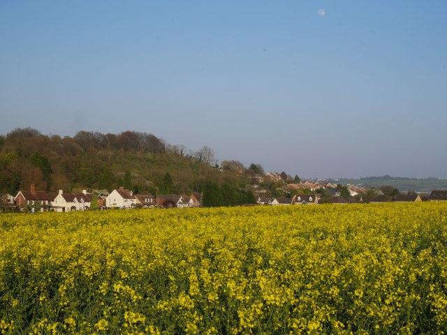 Rape-fields by Cuxton