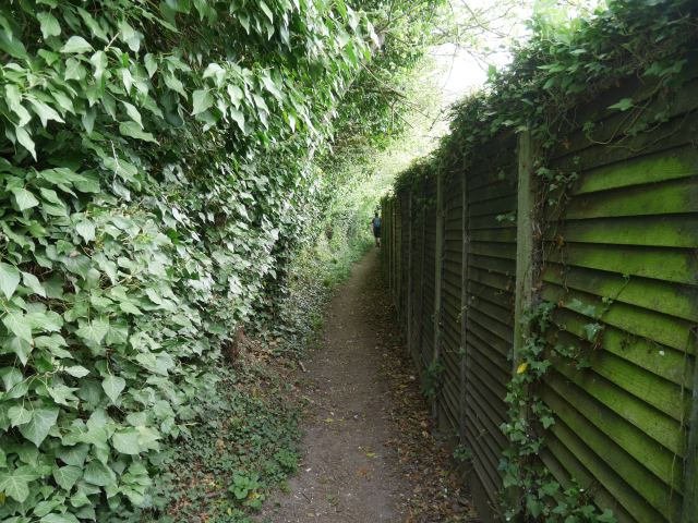 he North Downs Way - between hedges!