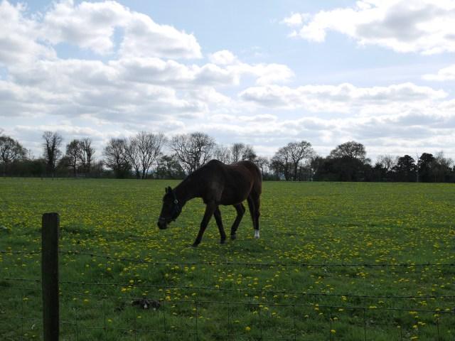 Pony at Harp Farm