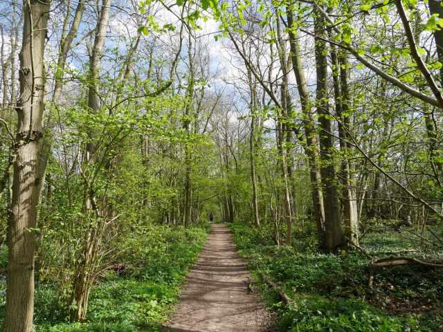 Boxley wood