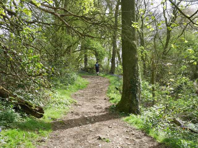 Path through Civiley Wood