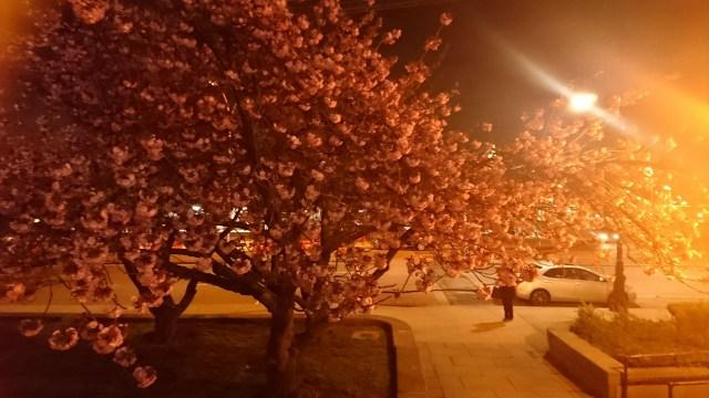 Nighttime back on Staten Island
