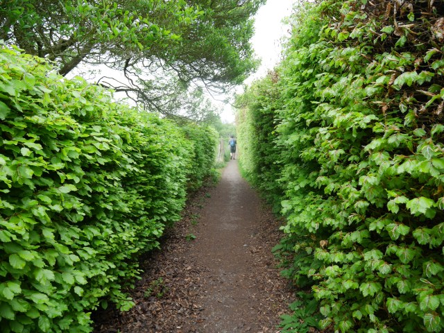 Follow this hedge path!
