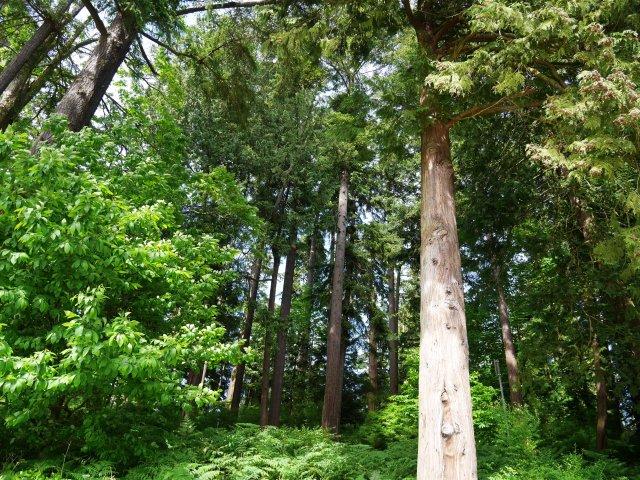 Amazing trees on Stanley Island