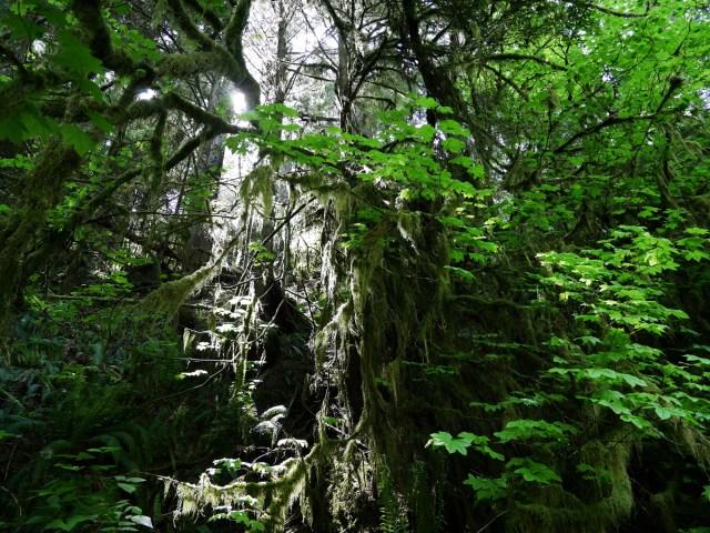 Light coming through the moss