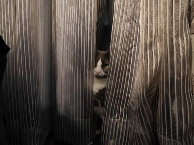 Totally hidden Monty