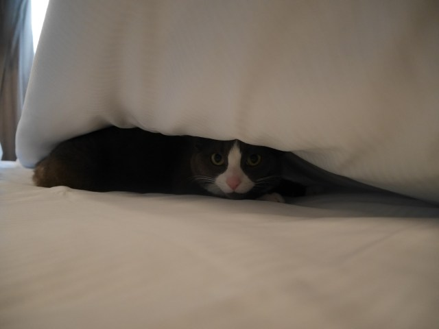 Just after the bed was newly made, I spotted a lump...