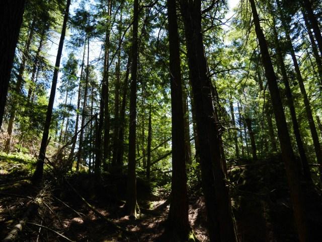 Pretty trees on Mount Gardner