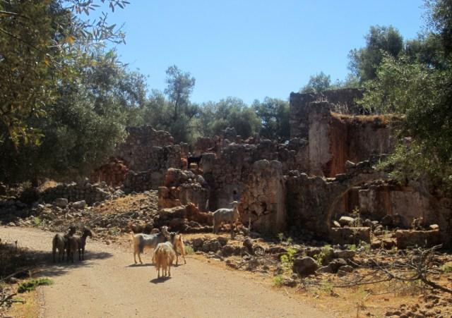 Aradena village goats