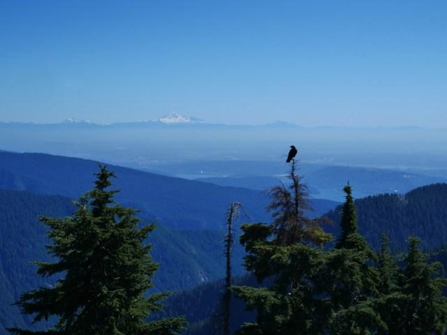 Mount Baker from Goat Mountain