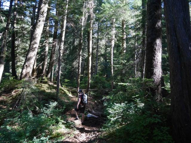 Gorgeous forest on Coliseum mountain
