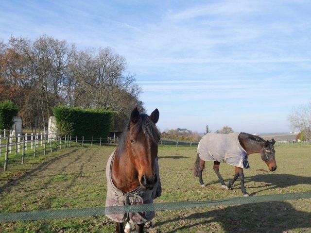 Les Horses