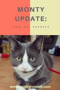 Monty Update - new cat harness