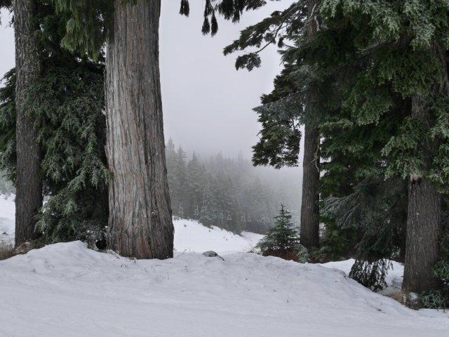Foggy Mount Seymour