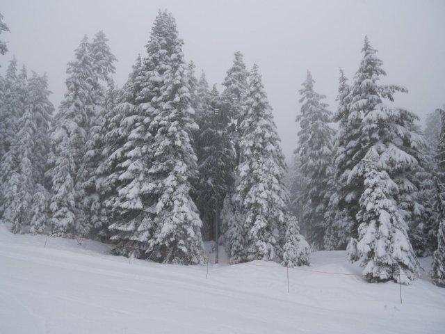 Mount Seymour snow