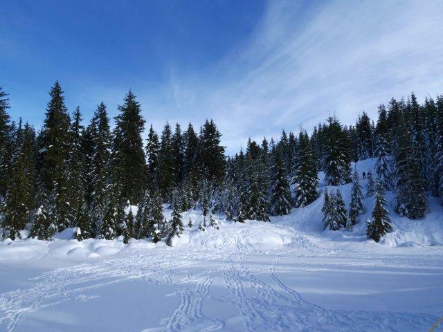 Snowshoe-land