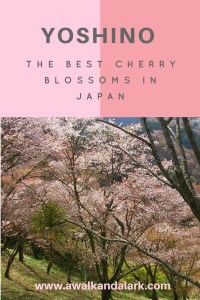 Best cherry blossoms in Japan - Yoshino