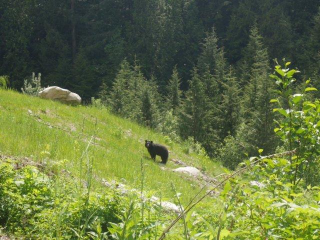 Bearnard the bear
