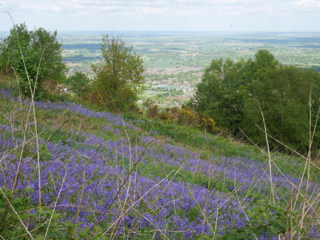 Bluebells in Malvern Hills