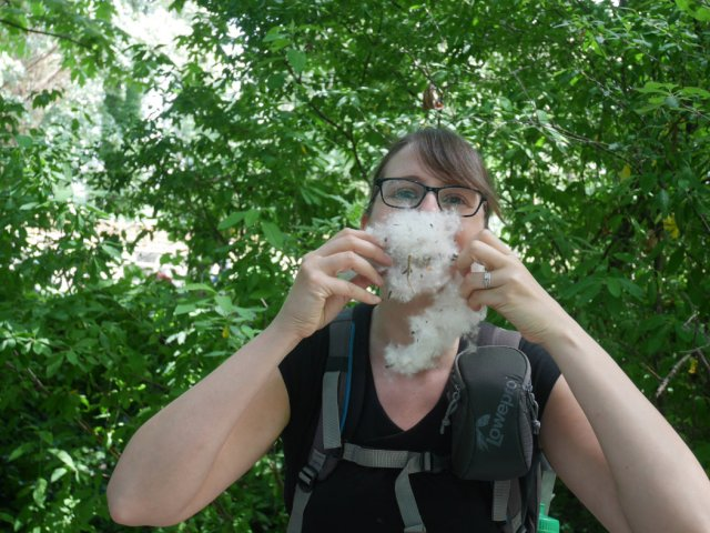 Cottonwood beard
