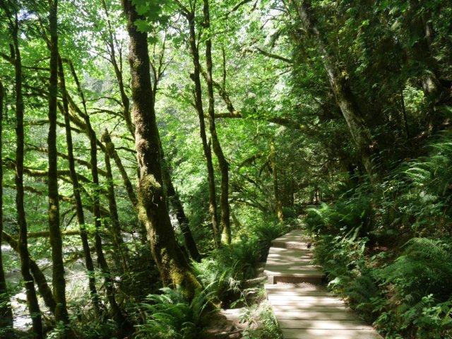 Gorgeous woods in Lynn Creek