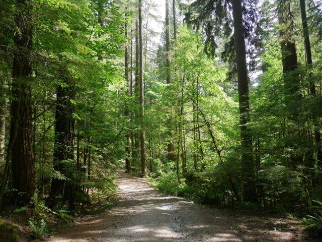 Back to quiet woods