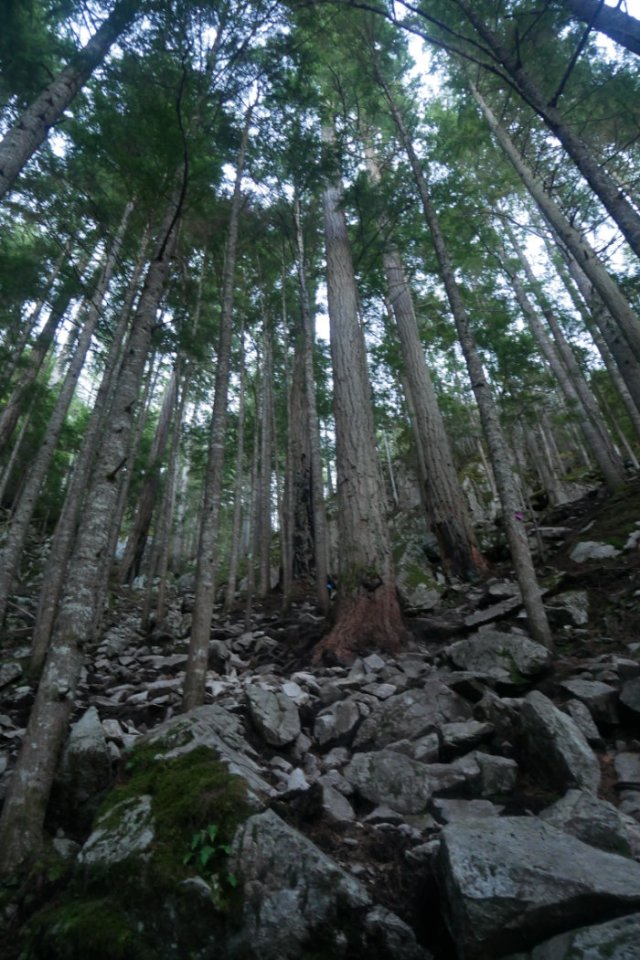 Trees on the sea to summit trail