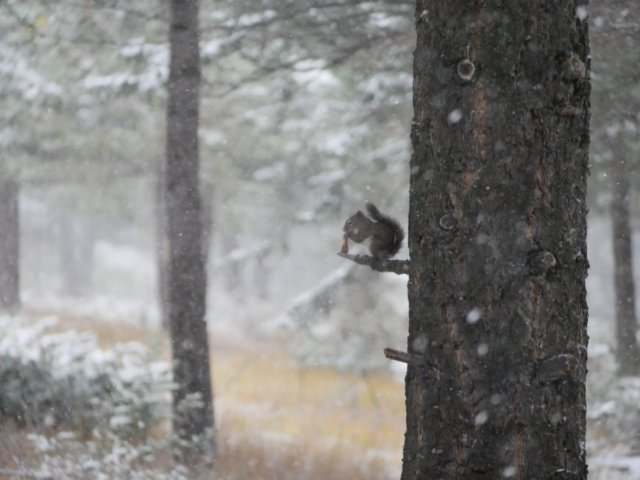Squirrel in the snow - hoodoos trail