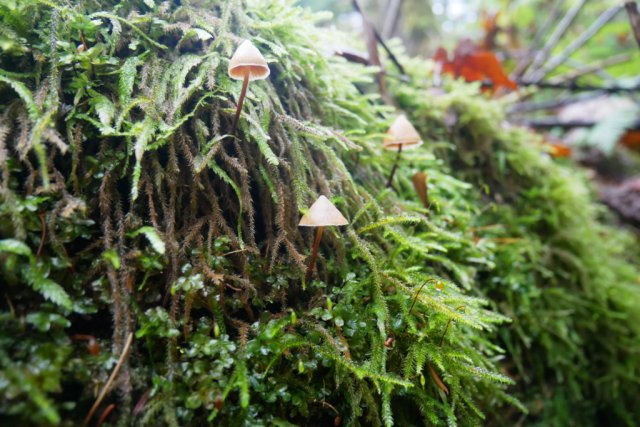 Mossy covered mushrooms