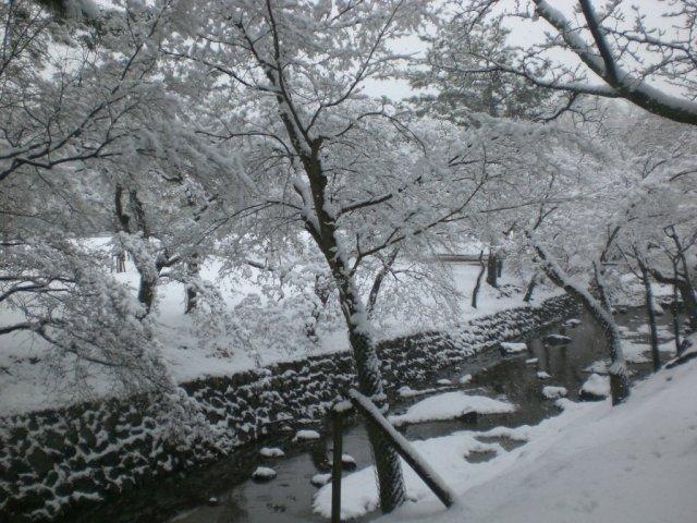 Nara koen in the snow