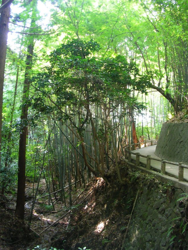 Yamanobe no michi bamboo forest