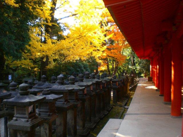 Autumnal Kasuga Taisha